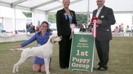 Windsor Championship Dog Show
